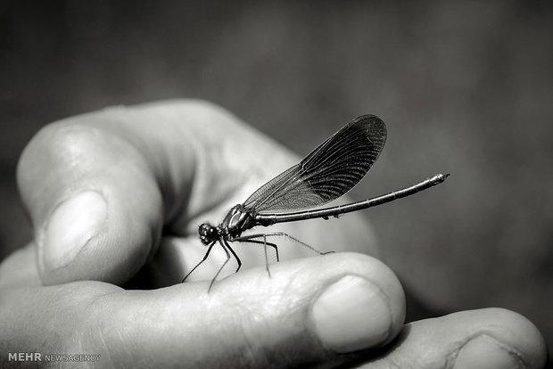 حشرات ویروسی سلاح جدید ارتش آمریکا می شوند