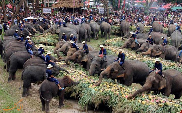 کمپ فیل ها در چیانگ مای، جایی برای تماشای فیل ها