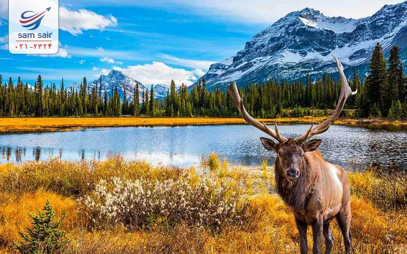 کانادا سرزمین عظیم سفید شمالی!