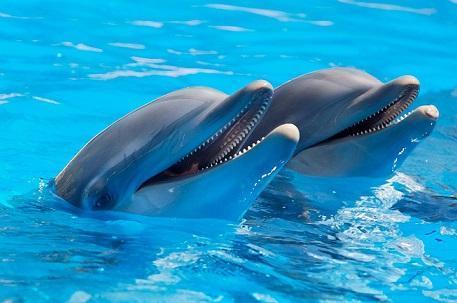 دلفین روباتیک 250 کیلوگرمی از راه رسید