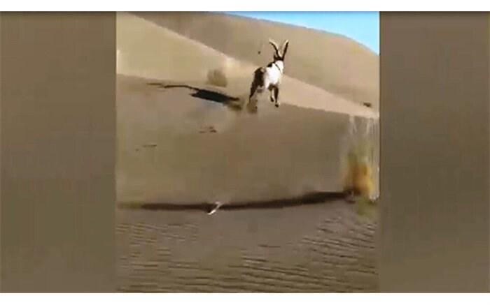 پرونده تخلف برای آفرود سواران مُخرب محیط زیست اصفهان تشکیل می گردد