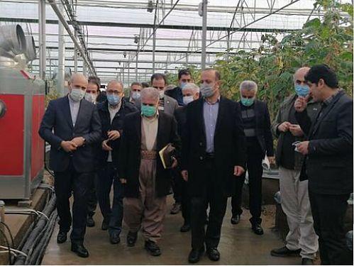 بازدیدمدیرعامل بانک کشاورزی ازگلخانه هیدروپونیک در بوکان